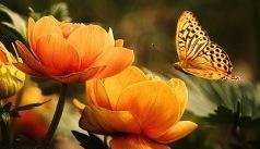 Ce à quoi je pense vole à moi - Papillon Attracté